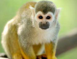 Animal Puzzle Wildlife and Logic