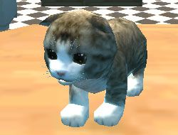 Cat 3D Simulator