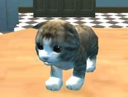 Cat Simulator Kitty Craft