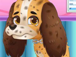 ER Cute Puppy