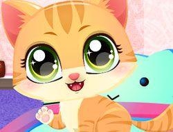Kitty Fun Care