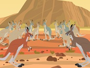 Kratt Brothers and the Kangaroos