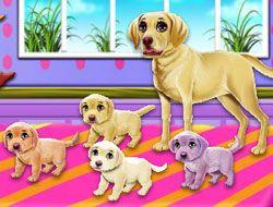 Labrador Quadruplets Newborn Caring