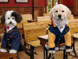 Pup Academy Scene Maker